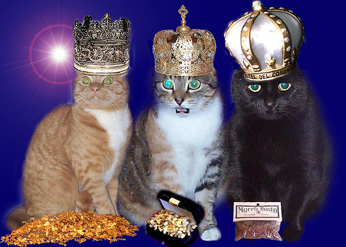 3wisecats